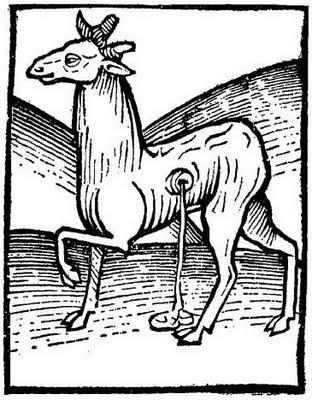 Ilustración ciervo almizclero